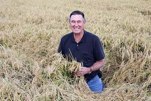 今年も実りました!カルローズ米の故郷、カリフォルニアでも収穫